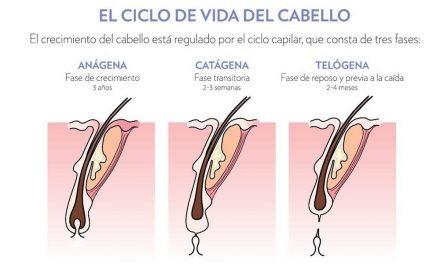 Crecimiento del pelo y cómo actúa el láser en cada fase